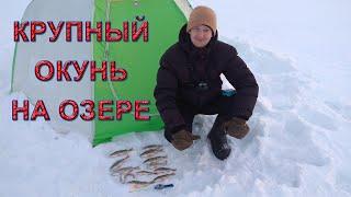 Окунь зимой Ловля на балансир Ловля на мормышку Зимняя рыбалка 2021 Отчет с рыбалки