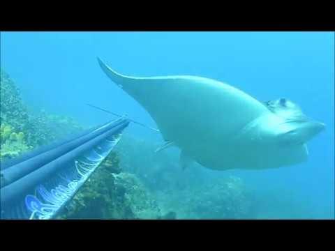 Podvodni ribolov Savudrija Avgust 2018