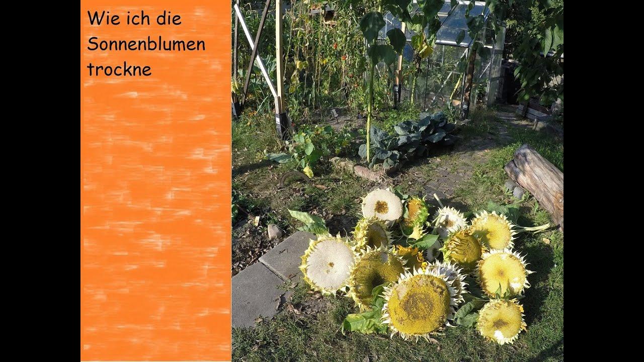 Wie Ich Sonnenblumen Trockne Vlog Vegan