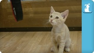 Kitten Loves Canon EOS 6D - Kitten Love