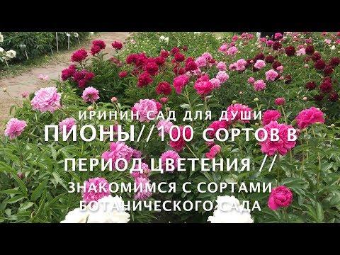 ПИОНЫ// 100 сортов в период цветения.// Знакомимся с сортами ботанического сада.
