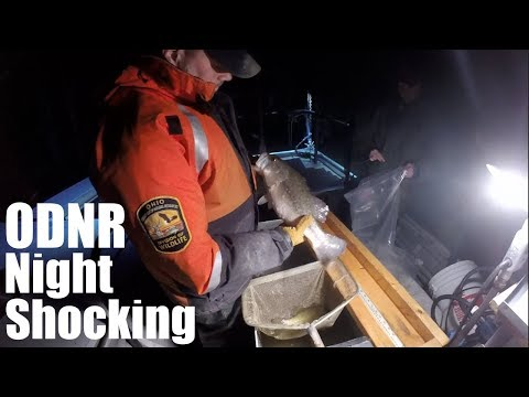 Night Shocking for Bass with ODNR on Berlin Lake