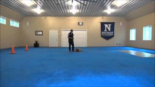 Lilly (goldendoodle Puppy) Dog Training Video Minneapolis