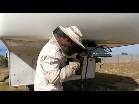 Bee hive removal Phoenix | Bee hive removal in a 5th wheel