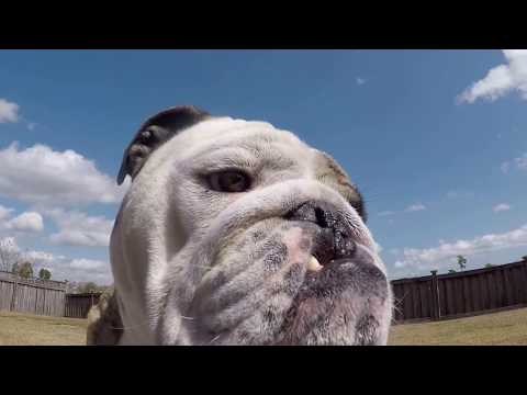 Reuben the Bulldog: Let Me Out