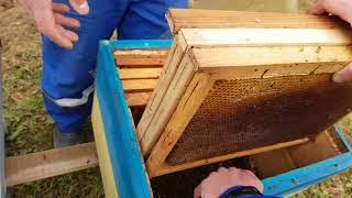 Ошибки начинающих пчеловодов .