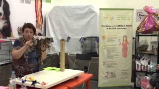 Бенгальская кошка. Выставка кошек 18-19 июля 2015. Санкт-Петербург.