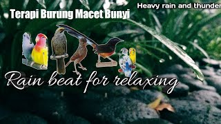 Suara air hujan terapi untuk burung stres.