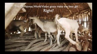 Goats make the best gift … Right? | World Vision