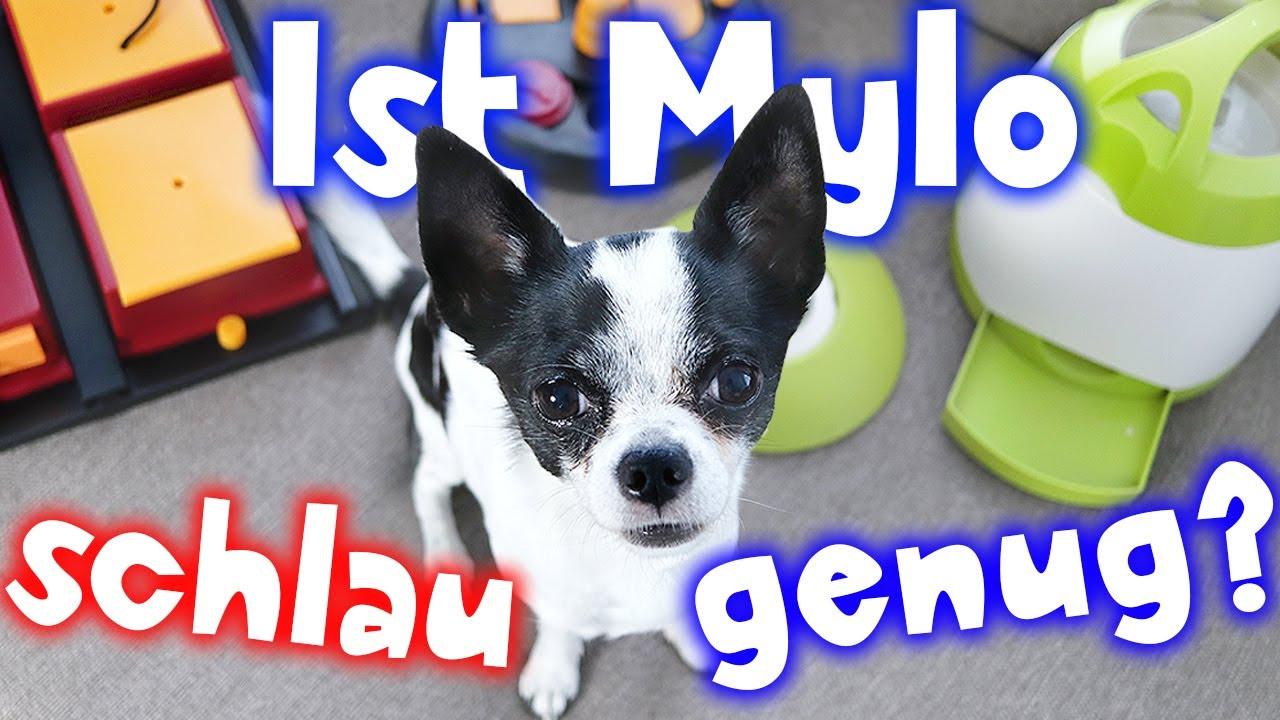 Hunde Intelligenzspielzeug Test 2020 ▷ die besten im Vergleich