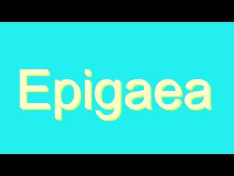 How to Pronounce Epigaea