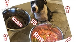 #rawfeeding What food does dogs like most, dry kibble or raw dog food diet?  Ultra Class Family