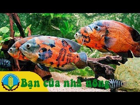 Những kinh nghiệm cơ bản cho người bắt đầu nuôi cá cảnh