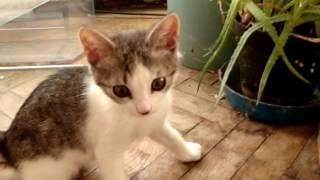 котенок в квартире