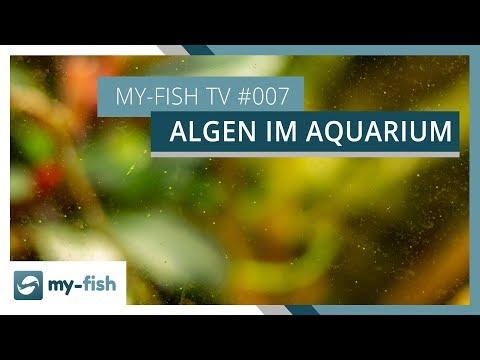 Was sind eigentlich Algen? | 3 Tipps um Algen in jedem Aquarium zu bekämpfen | my-fish TV