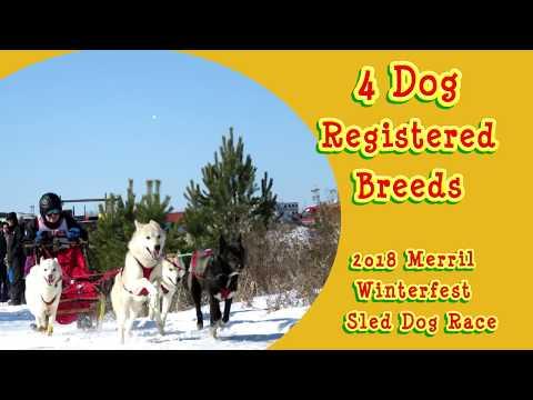 2018 Merrill Winterfest 4 Dog Registered Breed video