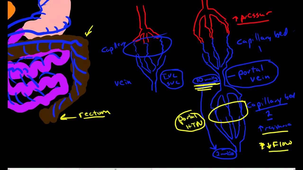 Hepatic Portal Circulation Anatomy & Physiology - YouTube