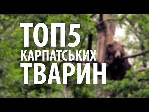 ТОП 5 Рідкісних Тварин (Карпати) / TOP 5 Animale Rare (Carpathians) - від Карпатами
