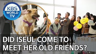Did Iseul come to meet her old friends? [Dogs are incredible/ENG/2020.03.24]