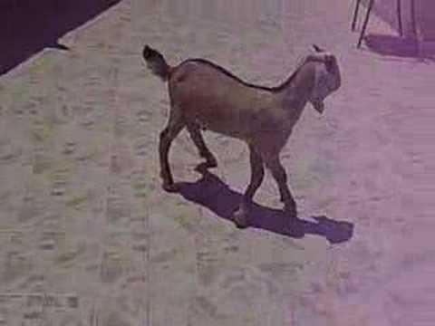 Mad Goat Disease