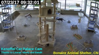 Animal Shelter Bonaire - Cat Palace thumbnail