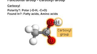 Biological Functional Groups