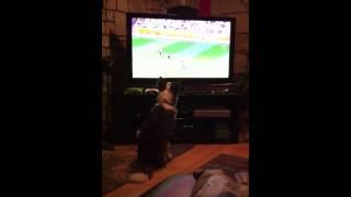 Dog watching soccer - still