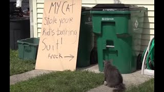 Cat burglar: Pet steals neighbors clothes from laundry room