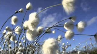 Cây và gió - Một bài hát rất tuyệt
