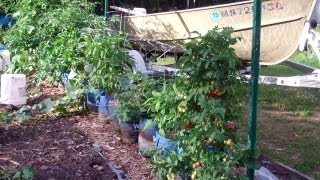 The Hybrid Rain Gutter Grow System! This Is One Amazing Garden! Happy,happy,happy I Am!