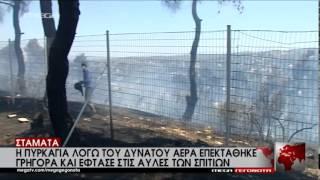 Πυρκαγιά στη Σταμάτα - MEGA ΓΕΓΟΝΟΤΑ