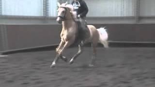 Golden Dream first jump