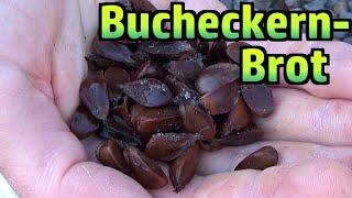 Bucheckern-Brot selbst gemacht #197