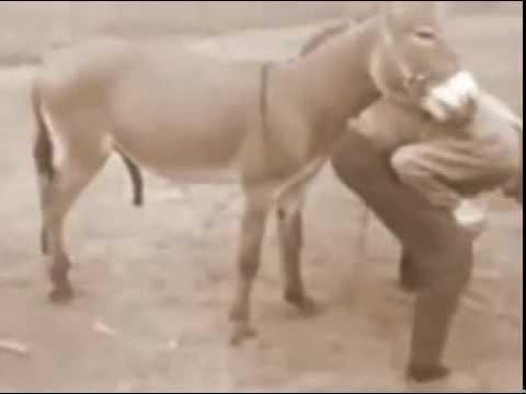 Секс у ишаков ослов