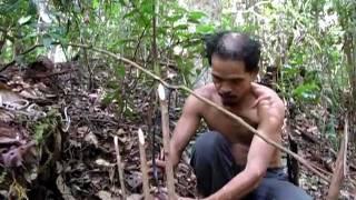 Pasang Jerat Kuau Kerdil Kalimantan (1)