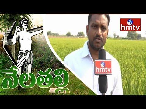 Success Story Of Palekar Natural Farming By Warangal Farmers | Nela Talli | HMTV