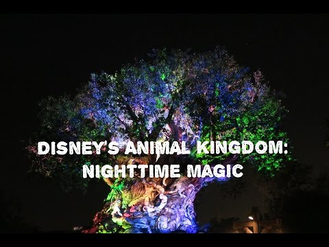 Disney's Animal Kingdom: Nighttime Magic