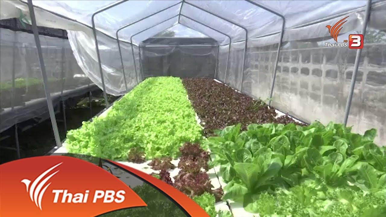 อาชีพทั่วไทย : ปลูกผักไฮโดรโปนิกส์ (24 พ.ย. 60)