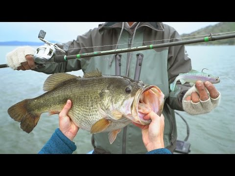 Fishing for Trophy Bass in Northern California! - NEW PB (Powered by LTB) | DALLMYD