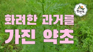 개똥쑥 항암 관절염 면역력 약초 산림 임업 농업 약용식…