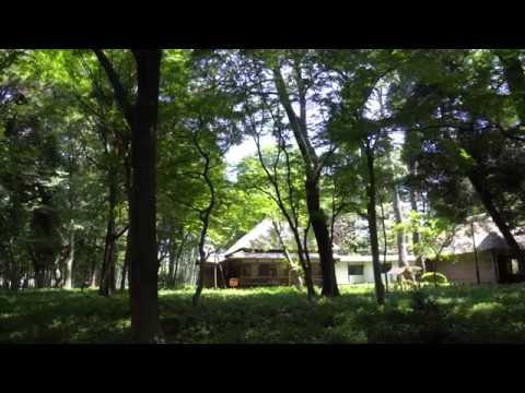 Test Roka Koen Park Setagaya Tokyo