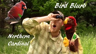 Bird Blurb - Northern Cardinal│Backyard Birdwatching│Illinois State Bird│Nighthawks Homage