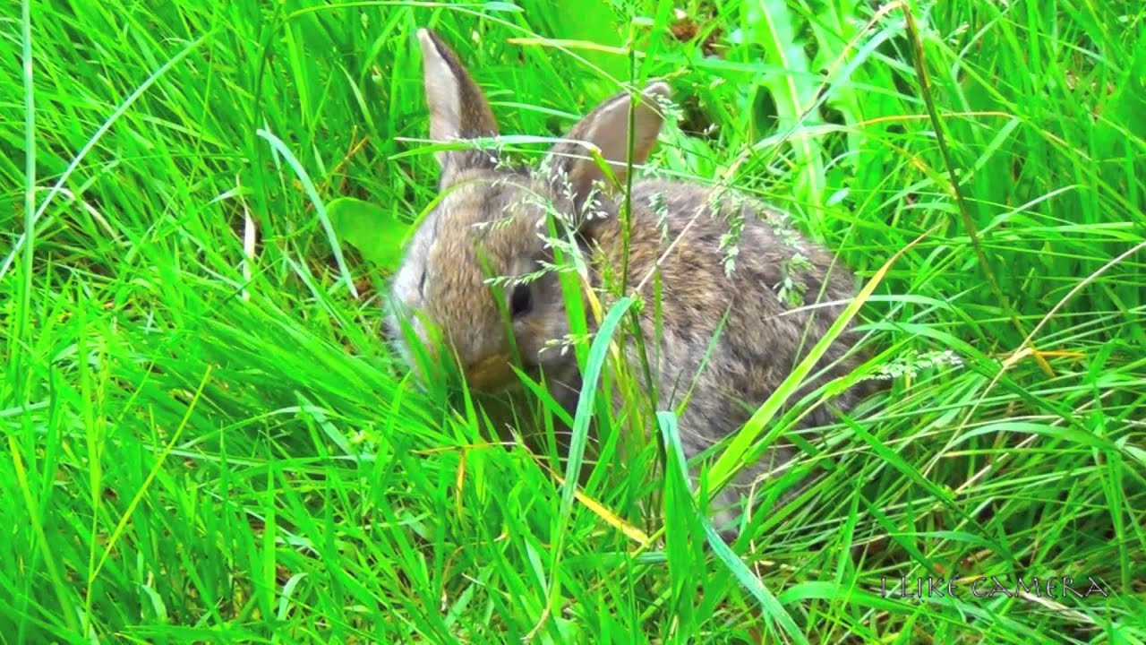 Image result for rabbit grass