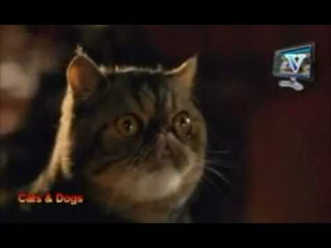 Cat And Dogs Movie