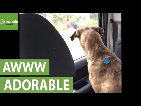 Dog cries after mom drops son off at school