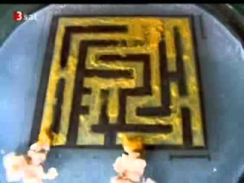 Slime Mold Physarum Finds the Shortest Path in a Maze
