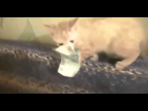 Funny Cat Fails - 2016 (Most Popular) - best and funniest videos #1