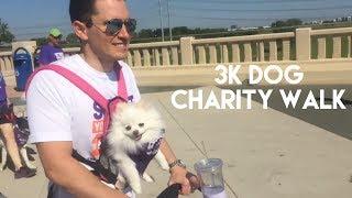 Puppy 5k Walk - STRUT YOUR MUTT