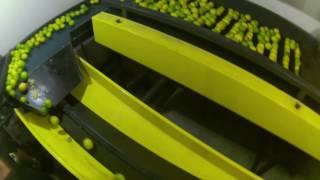 Maquina Compacta para Laranjas