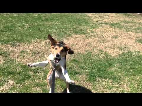 Dog Fail Slow-mo: Milo can't catch a stick